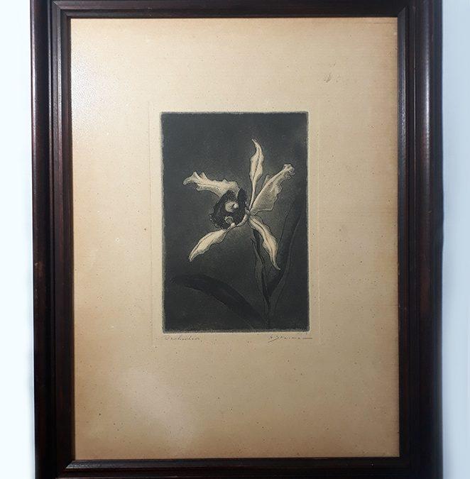 DI 72 – Quadro com calcografia original de Hans Steiner retratando flor de orquídea – ano 1944